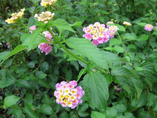 花です.jpg