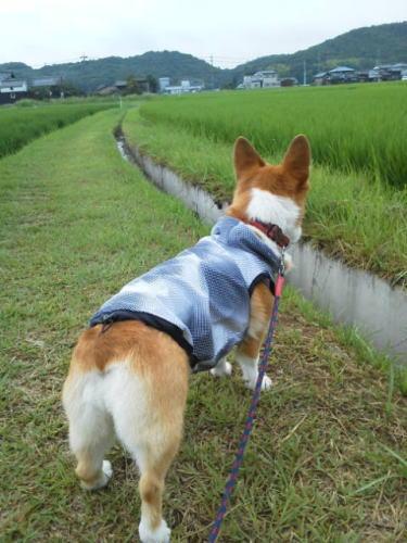 散歩に行くですよ