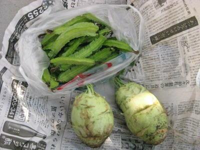 四角豆とコールラビ