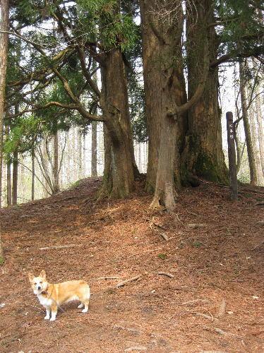 岡山森林公園