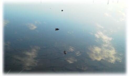 空に浮かぶ鴨.jpg