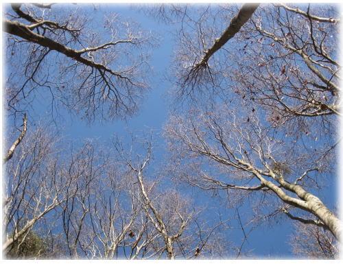 青い空と木立